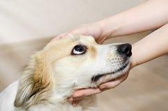 La tête du ` s de chien chez des mains du ` s des enfants Photos stock