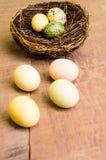 La tabella di legno con gli uccelli intercala ed uova verticali Immagini Stock