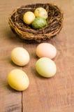 La tabella di legno con gli uccelli intercala ed uova verticali Fotografia Stock Libera da Diritti