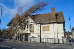 La taberna del puente en St Neots con el árbol caido en daño del tejado Fotografía de archivo