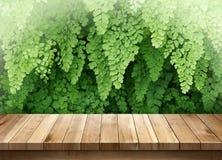 La tabla de madera con verde sale del fondo Foto de archivo libre de regalías