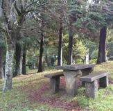 La tabla en el bosque Foto de archivo