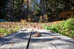 La tabla en el bosque de la caída, Canadá Fotos de archivo
