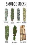 La tache sage colle l'ensemble tiré par la main de griffonnages Collection de paquets d'herbe illustration libre de droits