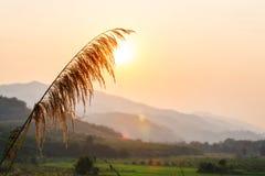 La Tailandia del Nord Fotografia Stock