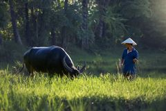 La Tailandia l'agricoltore e un bufalo Immagine Stock Libera da Diritti