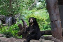 La Tailandia - 21 luglio 2018: Lo zoo o Khoa Din Park malese di Dusit dell'orso è uno zoo a Bangkok, Tailandia immagine stock libera da diritti