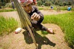 La Tailandia, uomini tailandesi dell'agricoltore che lavorano nel riso sistema Immagine Stock