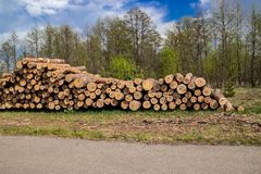 La tala de ?rboles industrial prevista en pino verde fresco de la primavera miente en la tierra a lo largo de la carretera fotos de archivo