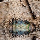 La tanière de la tortue Photographie stock