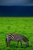 La Tanzania Fotografia Stock Libera da Diritti