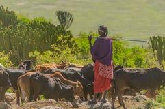 La Tanzania - area di conservazione di Ngorongoro Fotografie Stock Libere da Diritti