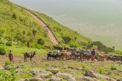 La Tanzania - area di conservazione di Ngorongoro Immagini Stock Libere da Diritti