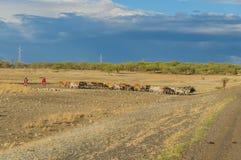 La Tanzania - parco nazionale di Tarangire - di Makuyuni Fotografia Stock