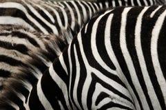 La Tanzanie. Photographie stock libre de droits