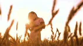La tarde de la muchacha se está colocando adentro en el vídeo de la cámara lenta de la naturaleza del campo de trigo muchacha her metrajes