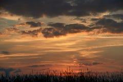 La tarde en el campo, asolea el brillo en wildflowers o malas hierbas foto de archivo