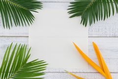 La tarjeta blanca en blanco con las hojas y la ave del paraíso del helecho florece fotografía de archivo libre de regalías