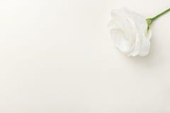La tarjeta de felicitación con blanco se levantó Foto de archivo libre de regalías