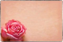 La tarjeta de felicitación con se levantó Fotos de archivo