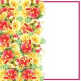 La tarjeta de felicitación de Illustation con la acuarela de las rosas se puede utilizar como tarjeta de la invitación Fotos de archivo libres de regalías