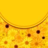 La tarjeta de la invitación con el gerbera amarillo y anaranjado florece Vector EPS-10 Fotos de archivo