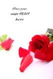 La tarjeta del día de San Valentín roja se levantó Imágenes de archivo libres de regalías