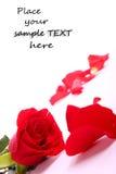 La tarjeta del día de San Valentín roja se levantó Imagenes de archivo