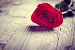 La tarjeta del día de San Valentín roja subió fotos de archivo libres de regalías