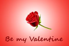 La tarjeta del día de San Valentín se levantó Fotografía de archivo libre de regalías