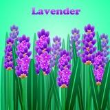 La tarjeta elegante de la lavanda con el marco de flores y del texto Foto de archivo