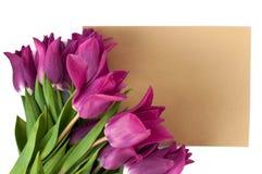 la tarjeta y el sobre en blanco de felicitación con los tulipanes púrpuras sobre blanco aislaron el fondo Imagen de archivo libre de regalías