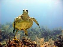 La tartaruga di mare incontra la testa dell'operatore subacqueo di scuba sopra fotografia stock