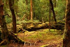 La Tasmania Fotografia Stock Libera da Diritti