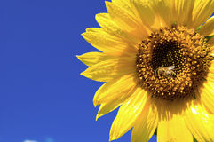 La tassa di estate di miele immagine stock libera da diritti