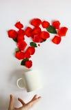 La tasse blanche pleine des roses a glissé de ses mains fond blanc, pétales de rose rouges Images stock