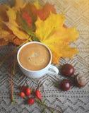 La tasse de feuilles de jaune d'érable de boisson de café a modifié la tonalité la lumière du soleil Image libre de droits