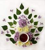 La tasse de thé avec le ressort fleurit sur le fond blanc photos libres de droits