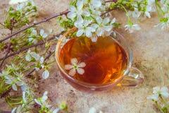 La tasse de thé noir avec la fleur de ressort s'embranche sur le vieil en bois images libres de droits