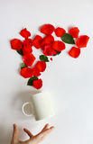 La taza blanca llena de rosas se deslizó de sus manos fondo blanco, pétalos color de rosa rojos Imagenes de archivo