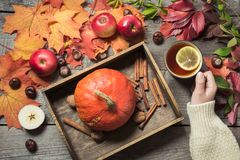 La taza que se calienta de té a disposición con una decoración de calabazas, las manzanas y las hojas de otoño en un vintage de m Fotos de archivo