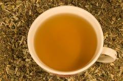 La tazza di tè di erbe Fotografia Stock