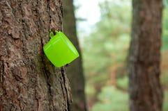 La tazza verde appende sull'albero Fotografie Stock Libere da Diritti