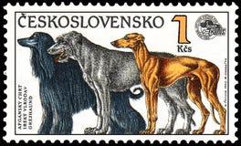 LA TCHÉCOSLOVAQUIE - VERS 1990 : emboutissez, imprimé en Tchécoslovaquie, des expositions un lévrier afghan, chien-loup irlandais Photos stock