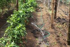 La technologie de arrosage s'est développée dans les jardins de montagne Photo libre de droits