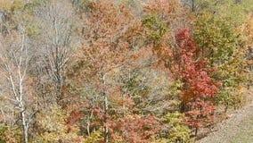 La telesilla escénica monta el follaje de otoño Winterplace Ski Resort Top de la montaña WV del top plano almacen de video