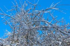 La tempête de pluie verglaçante sur les branches, de belles branches de la glace en cristal après l'hiver pleuvoir photo stock