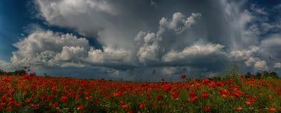 La tempesta, incombente sul campo del papavero Fotografia Stock Libera da Diritti