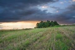 La tempesta si rannuvola il campo e gli alberi dell'avena. paesaggio rurale fotografia stock
