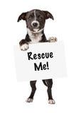La tenencia blanco y negro del perrito me rescata muestra Imágenes de archivo libres de regalías